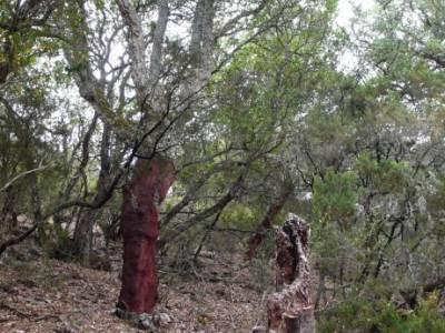 Parque Nacional Monfragüe - Reserva Natural Garganta de los Infiernos-Jerte; viajes senderismo madr